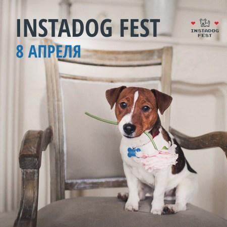 Первый фото-фестиваль для собак и их владельцев