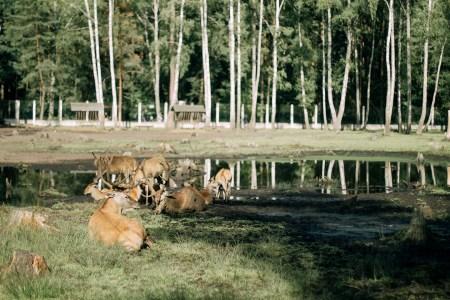 Беловежская пуща — записки путешественников