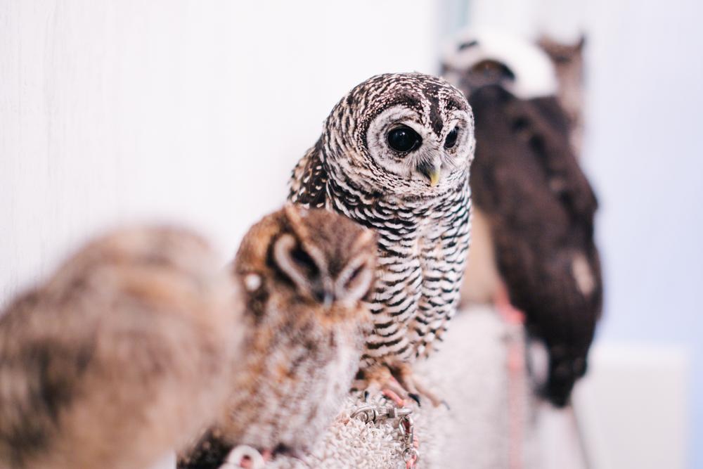 owls-151119-4