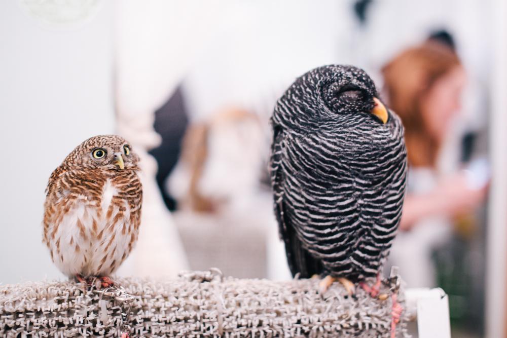 owls-151119-6
