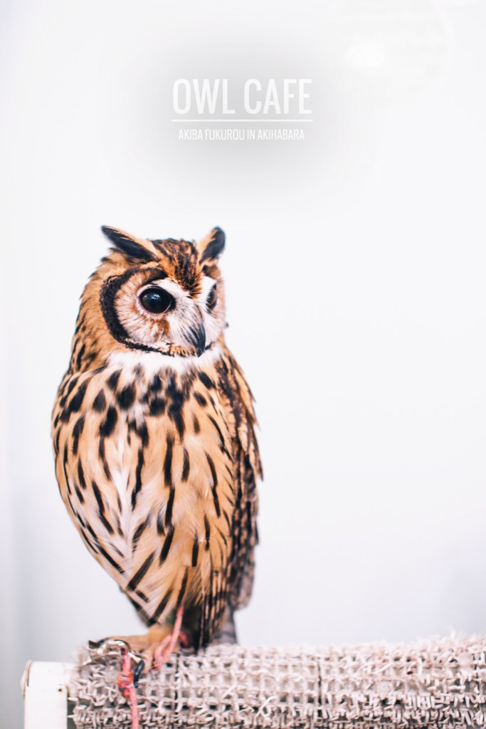 owls-151119-feature