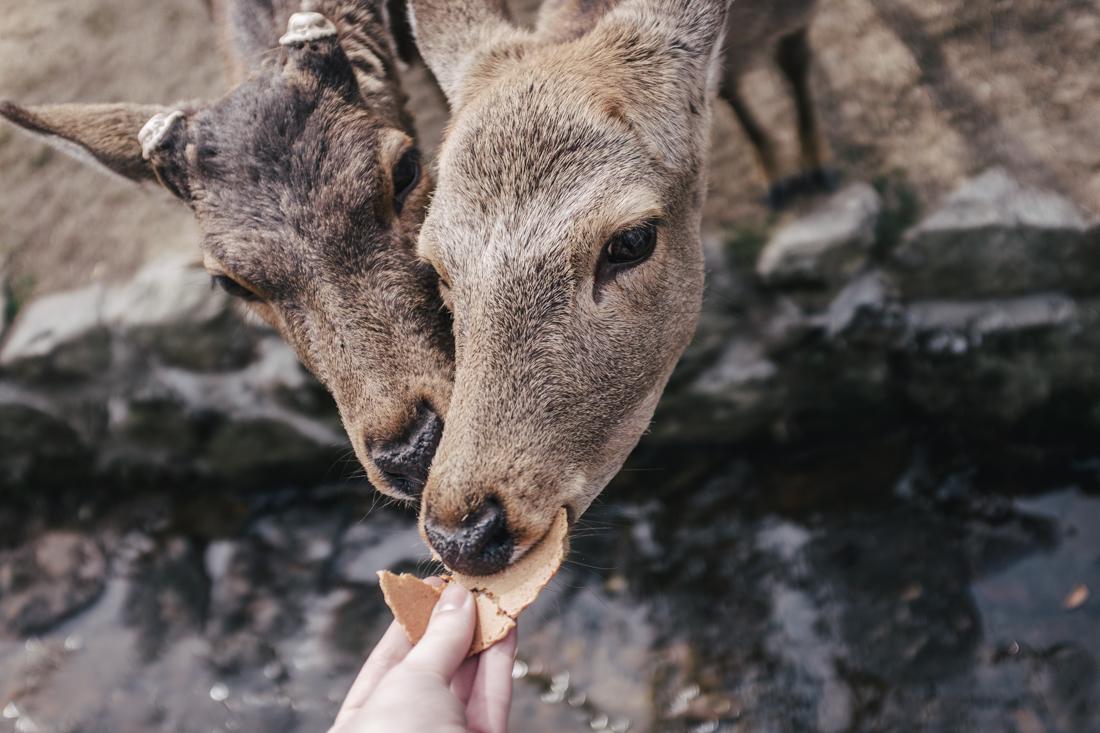Nara-Park-160306-15