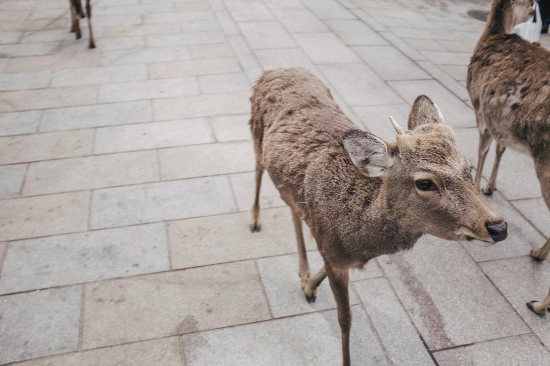 Nara-Park-160306-38