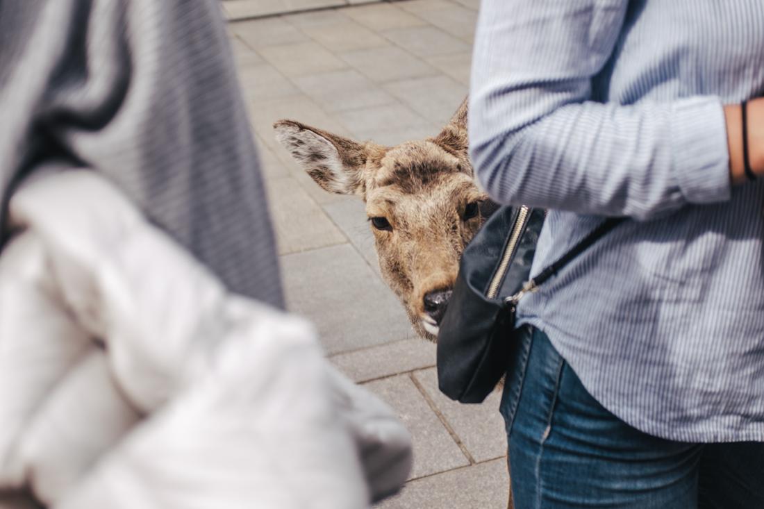 Nara-Park-160306-45