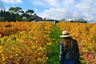 Exploring among the vibrant autumn colours at Coriole vineyards at Sea & Vines.
