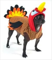 Turkey Costume for Dogs