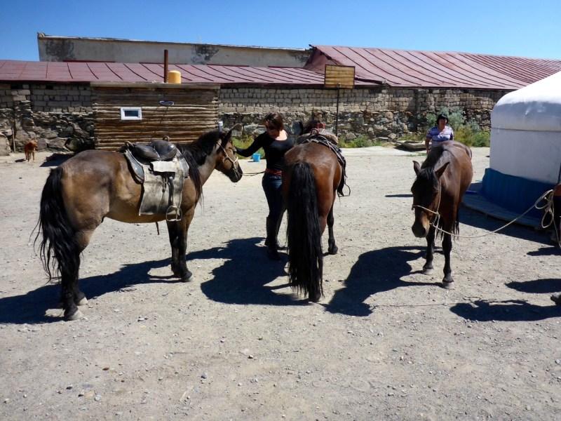 Buying Horses in Ölgii, Mongolia