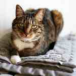 Tips for Preparing Your Cat for a Vacation Without You