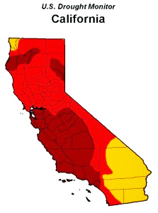 "(Eighty percent of California is considered to be in ""extreme"" drought — the areas marked by red and burgundy, according to the US Drought Monitor.)"