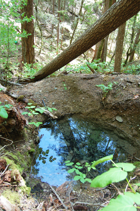 One of six springs destroyed in order to feed irrigation lines.