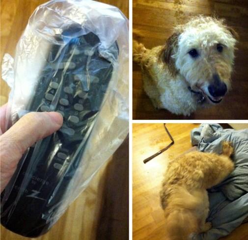 georgia-road-trip-hotel-wet-dog