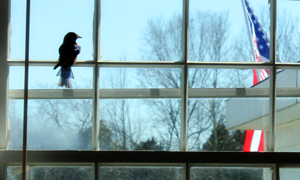 bird-in-workshop-window-3