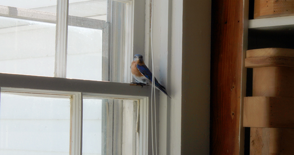 bird-in-workshop-window