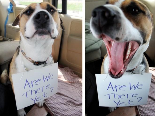 the-jackson-chronicles-dog-sign