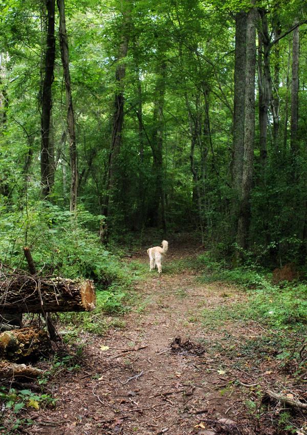 chance-walking-wood-pathway