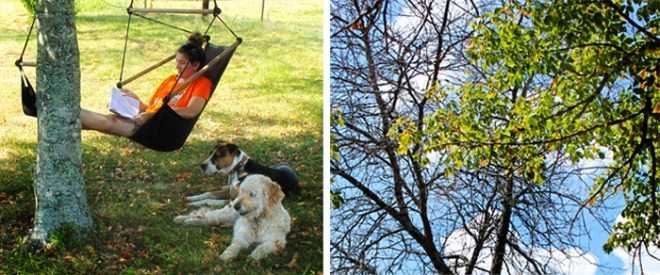 chair-swing-me-dogs