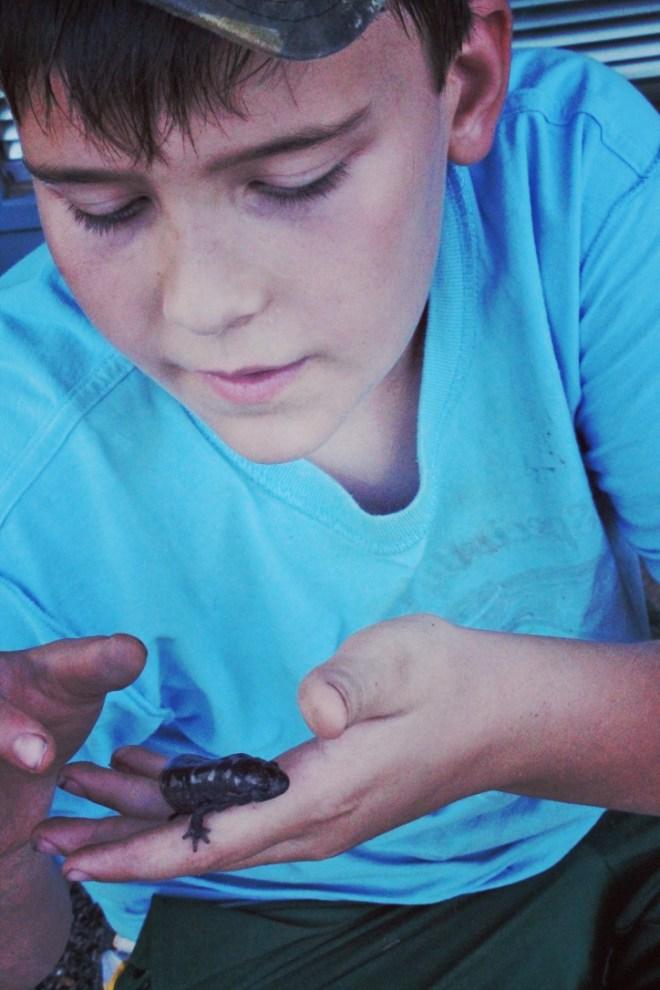 redneck-bootcamp-box-salamander