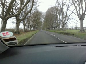 photo of trees at Kingston Lacy