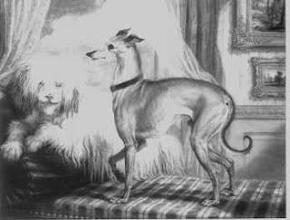 Engraving of an Italian greyhound next to a shaggy white dog.