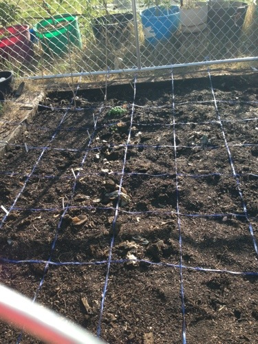 Square foot gardening. FWI.