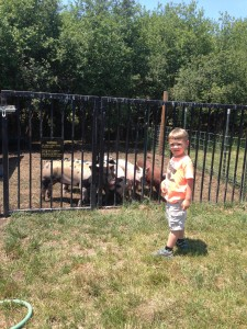 Wyatt and his pigs.