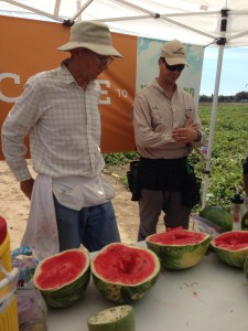 I loved learning about watermelon breeding! It was soooo very different from cattle breeding!