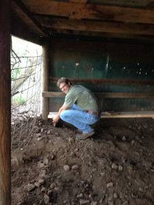 Remember the Montana Cowboy? He helped me install some bumpers so the piglets have a place to hide from Mom.