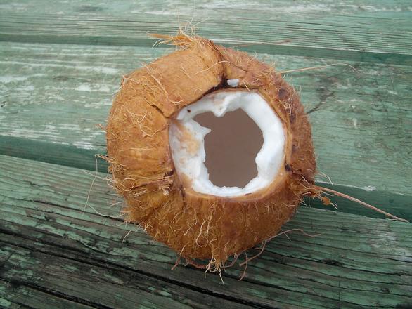 coconut-1324226