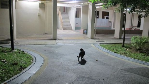 "There are an estimated 600 ""community cats"" roaming the housing estates of Yishun"