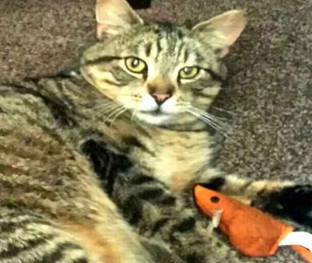 Ollie is pictured playing with his favourite toy again