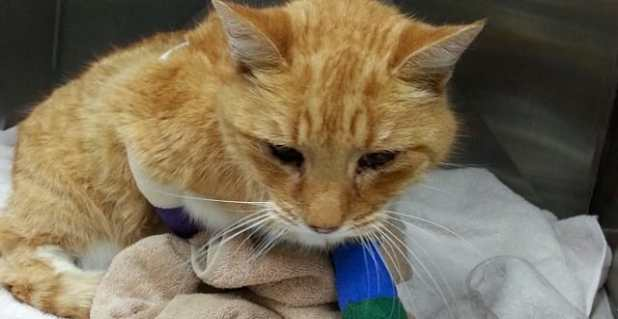 Simba the cat is back home after losing three toes.