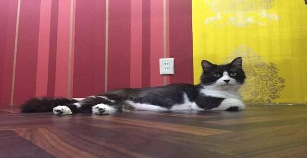 An apple cat lounges around. Image: Neco Republic
