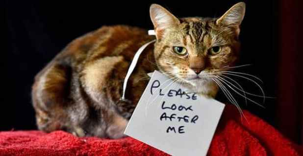 Cat with a tumour was abandoned with note around its neck