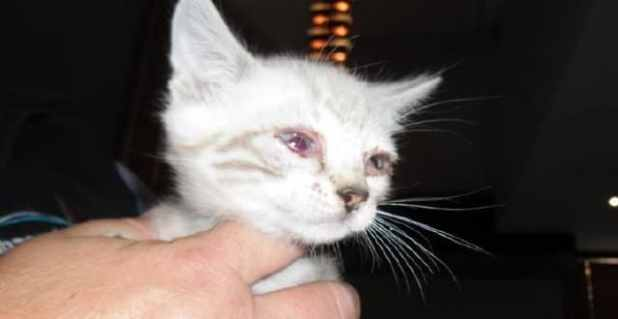 Kittens seized from Mr Cheng's property were in a bad state.