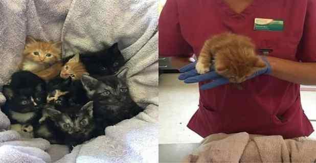 Kitten almost dies after flea treatment mistake