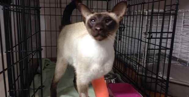 Coco the cat was shot in the leg in Wanaka on July 28.