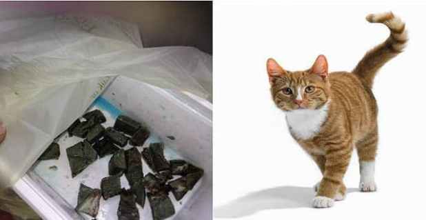 Gary O'Donnell left poisoned meat for his neighbour's cat, Fred (not pictured)