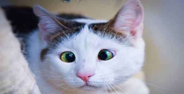 1cat-lived-her-early-years-in-fear-min