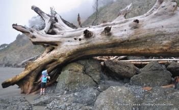 Alex examines a giant tree downed by the ocean.