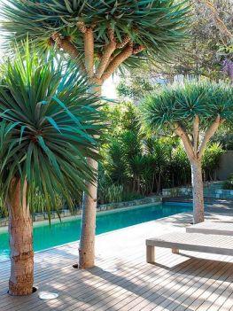 Tropical garden 1