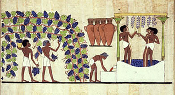 Ancient Egypt Wine