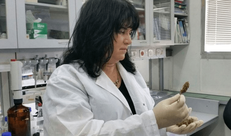 After years of quiet progress, Israeli medical cannabis research is budding JP
