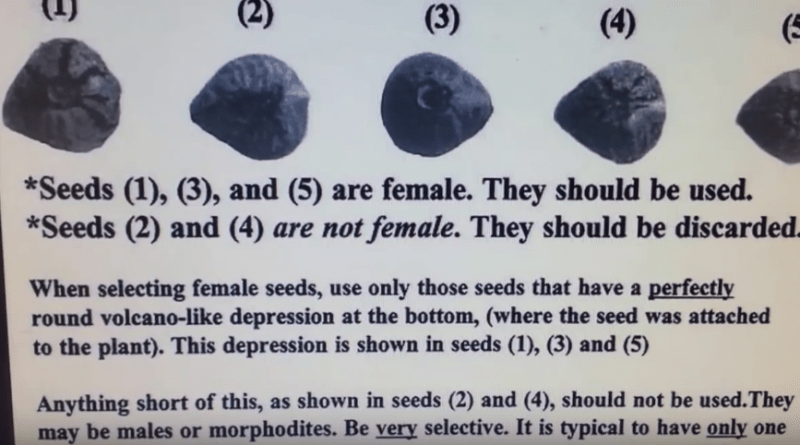 How to tell if a Marijuana seed is female