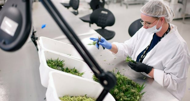 Medical benefits of cannabis Irish Times