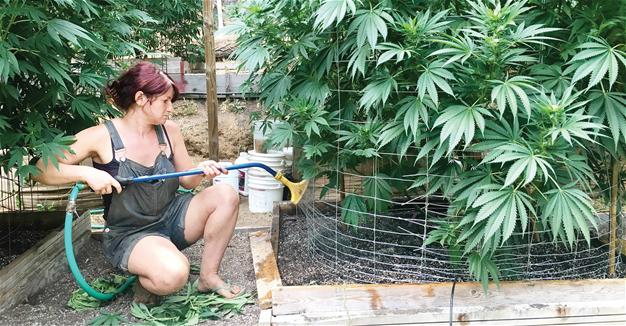 turkey-permits-controlled-cannabis-production-in-19-provinces