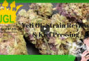 Yeti OG Strain Review & Kief Pressing