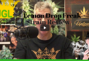 Lemon Drop Freak Strain Review