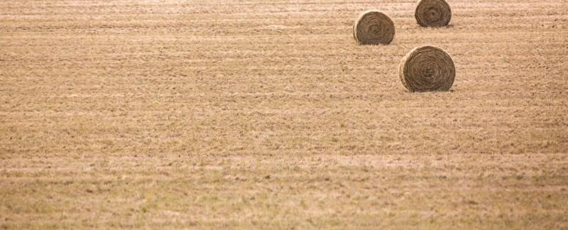 Four Hay Rolls, South Dakota, USA