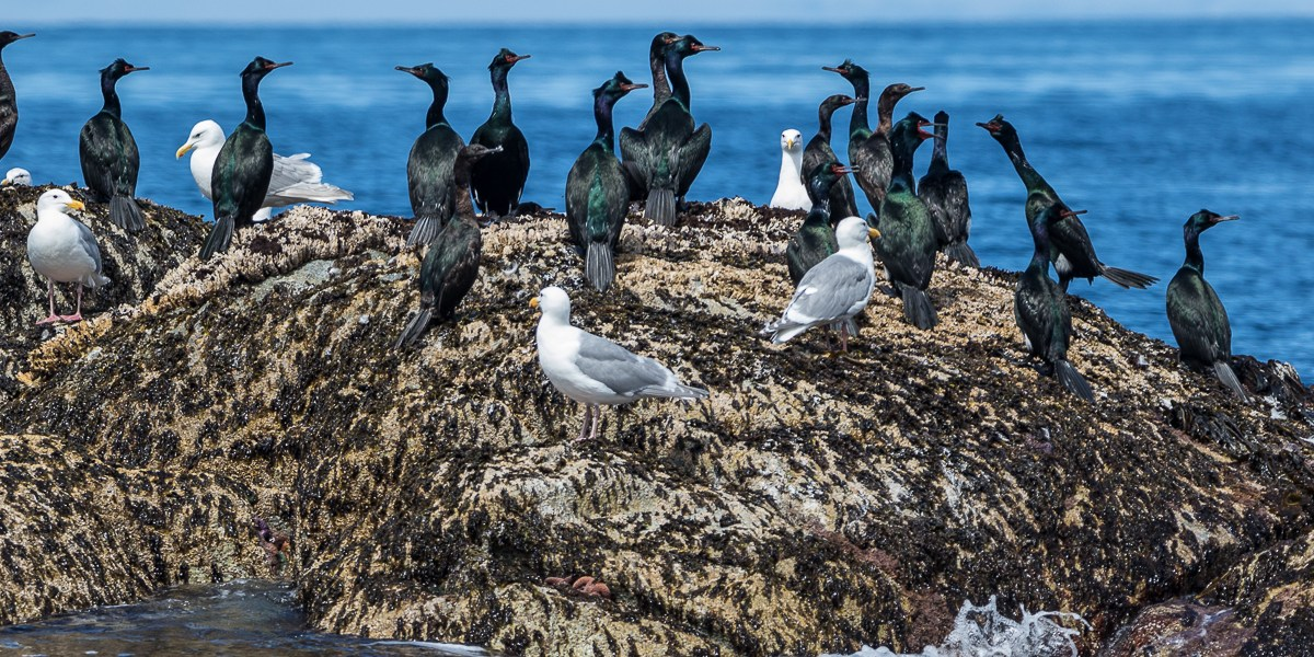 Photo Of The Day – Cormorants And Gulls