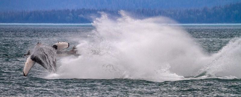 Peter-West-Carey-Alaska2015-0707-0595